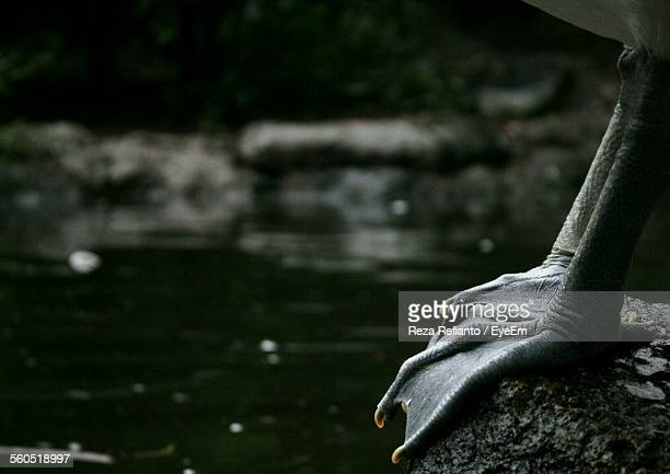 Close-Up Of Duck Leg On Rock