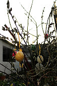 Close-Up Of Easter Eggs Hanging On Plant