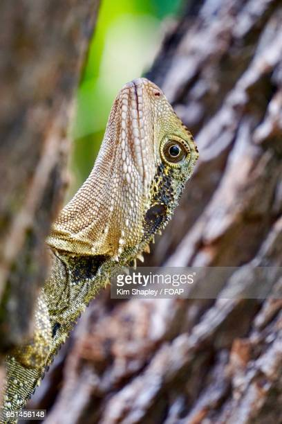 Close-up of eastern water dragon