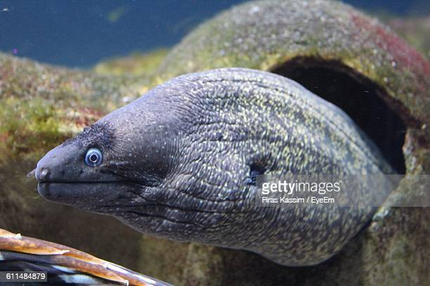 Close-Up Of Eel In Sea