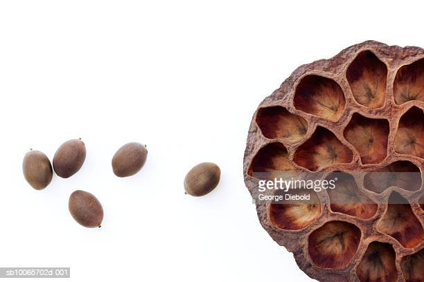 Close-up of empty lotus seed shell and lotus seeds