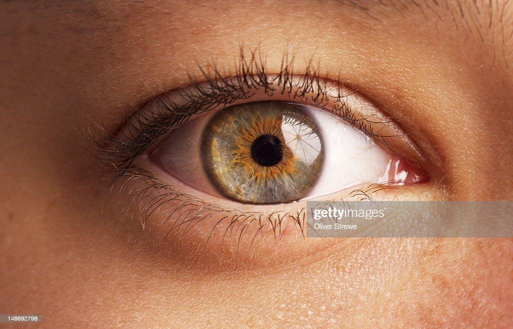 Close-up of eye. : Stock Photo