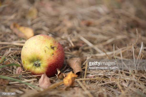 Close-Up Of Fallen Apple On Dry Grass