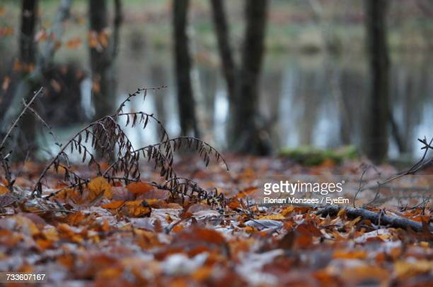 Close-Up Of Fallen Tree In Forest During Autumn