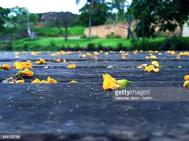 Close-Up Of Fallen Yellow Flowers On Footpath