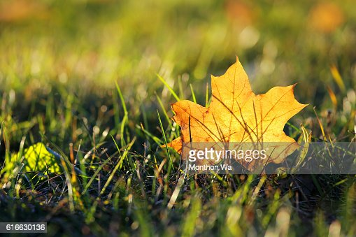 Close-Up Of Falling Leaves In Field : Stock Photo