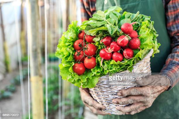 Close-up of farmer holding basket with vegetables