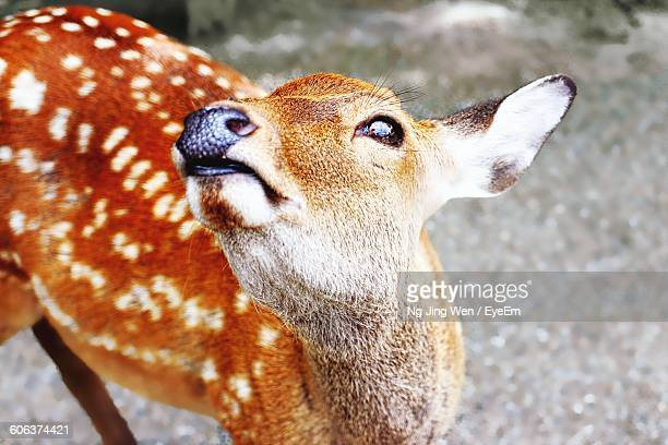 Close-Up Of Fawn