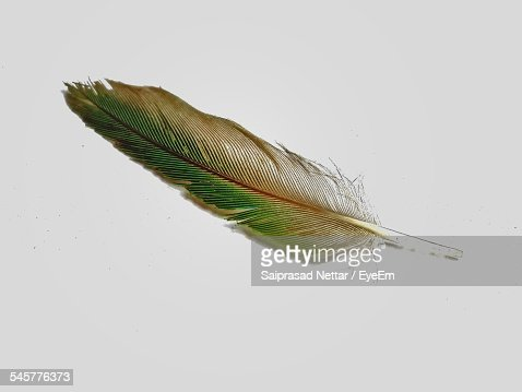 Close-Up Of Feather Over White Background