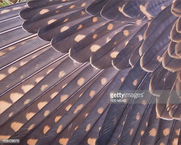 close-up of feathers on wing of brown falcon