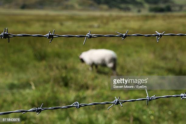 Close-up of fence with sheep in background