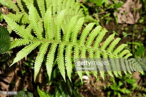 Close-up of fern leaves : Foto de stock