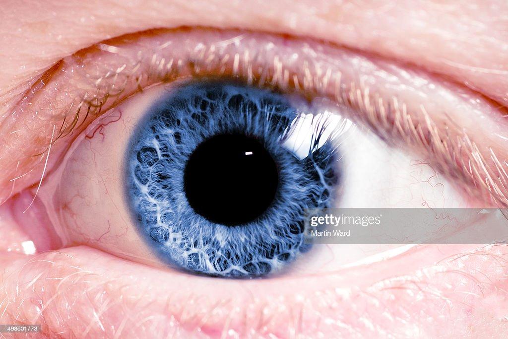 Close-up of fiery blue eye