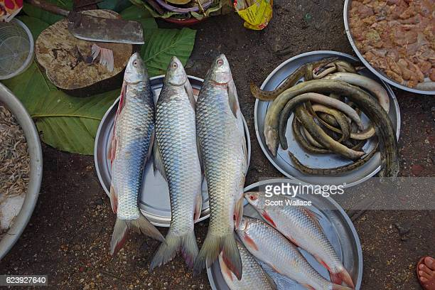 Closeup of fish and eels for sale at a market Pyay Myanmar 2013