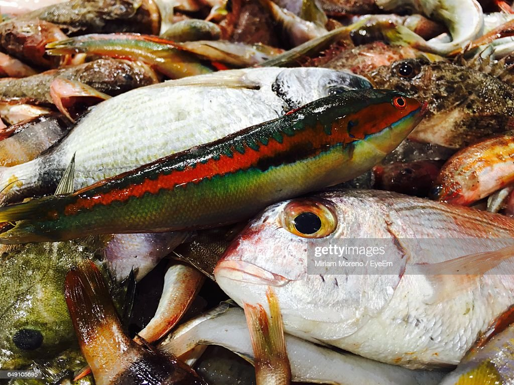 Closeup of fish for sale at market stock photo getty images for Stock fish for sale