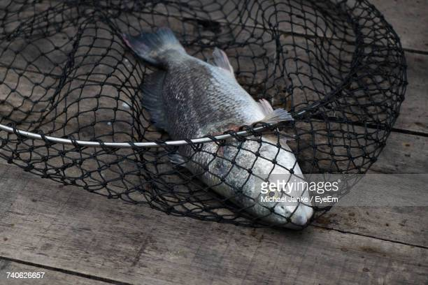 Close-Up Of Fish In Net