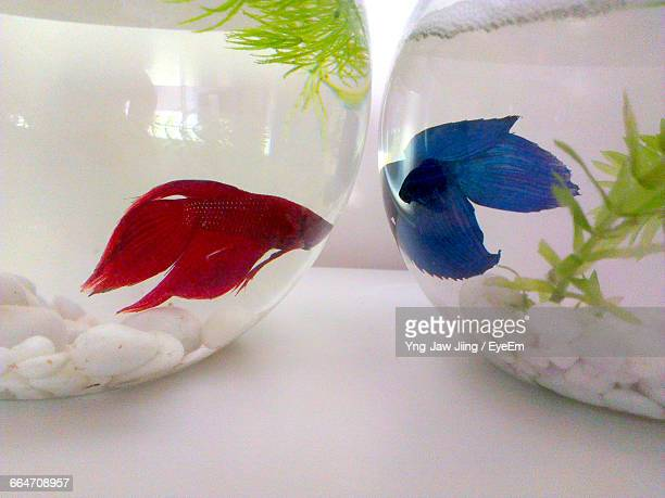 Close-Up Of Fishbowls On Table At Home