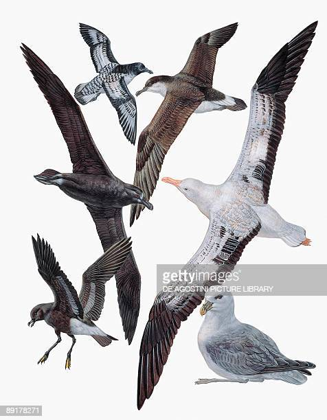 Closeup of flock of birds of the procellariiformes family