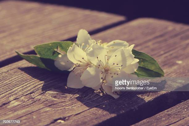 Close-Up Of Flower On Wooden Table