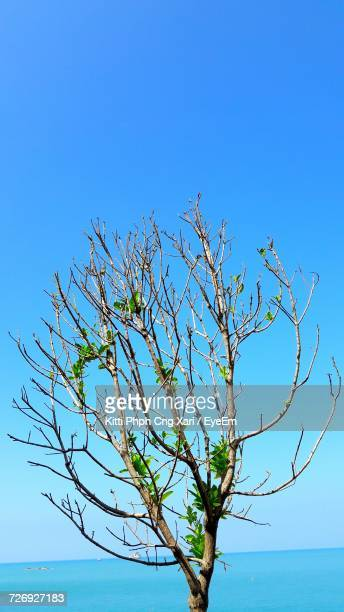 Close-Up Of Flower Tree Against Clear Blue Sky