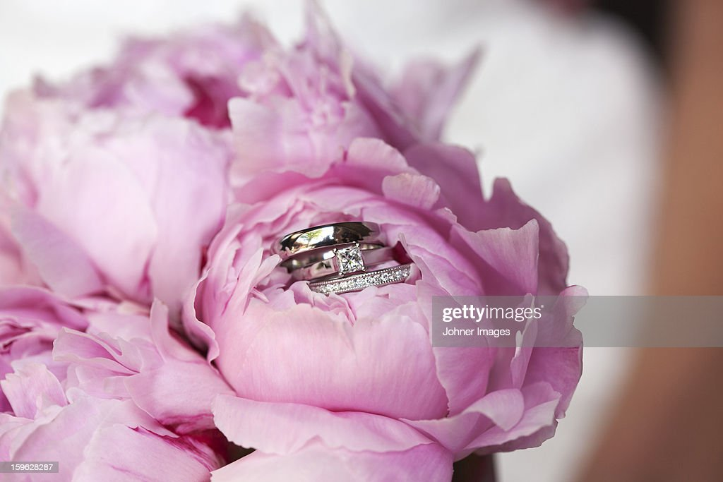 Close-up of flower with rings inside : Stock Photo