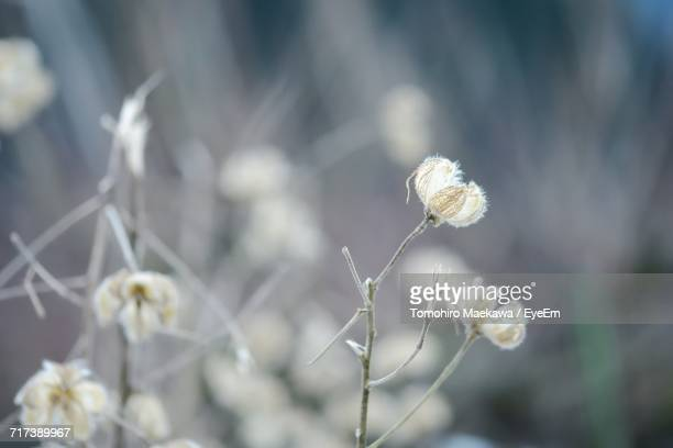Close-Up Of Flowers Against Blurred Background