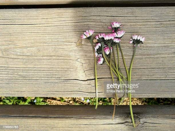 Close-Up Of Flowers Against Wooden Wall