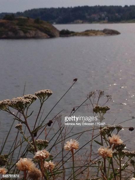 Close-up of flowers and idyllic lake