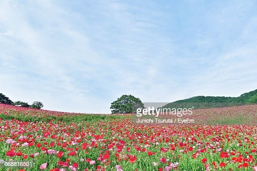 Close-Up Of Flowers Blooming In Field