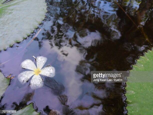 Lily kwan stock photos and pictures getty images for Floating flowers in water