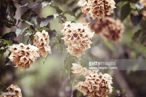 Close-Up Of Flowers Growing On Tree