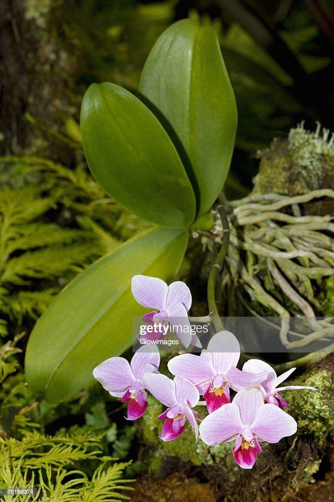 Close-up of flowers in a botanical garden, Hawaii Tropical Botanical Garden, Hilo, Big Island, Hawaii Islands, USA : Foto de stock