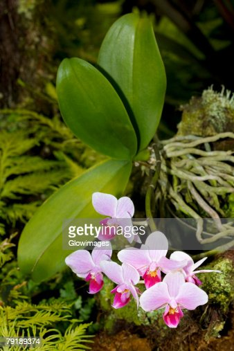 Close-up of flowers in a botanical garden, Hawaii Tropical Botanical Garden, Hilo, Big Island, Hawaii Islands, USA : Stock Photo