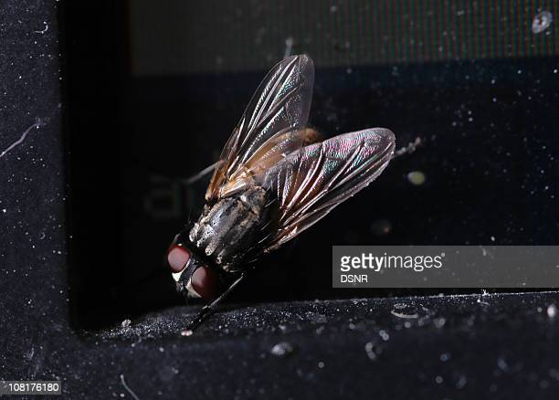 Close-up of Fly Walking on Dirty Computer Monitor