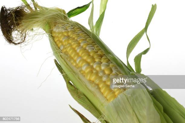 Close-up of Fresh Corn on a white background (zea mays)