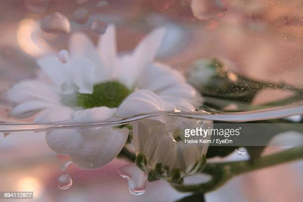 Close-Up Of Fresh Flower With Water Drops