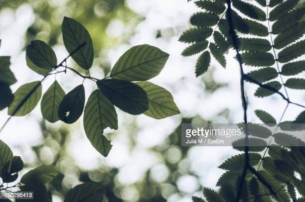 Close-Up Of Fresh Green Leaves Against Sky