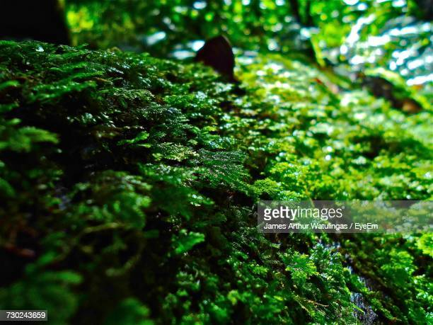 Close-Up Of Fresh Green Tree In Forest