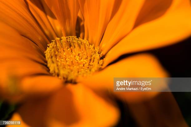 Close-Up Of Fresh Orange Flower Blooming Outdoors