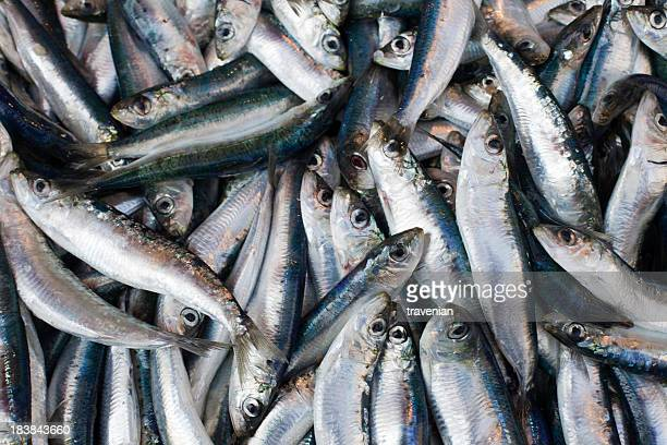 Close-up of fresh sardines grouped together