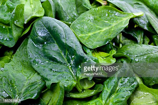Closeup of fresh wet green spinach leaves