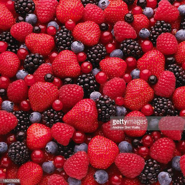 Close-up of freshly picked mixed berries