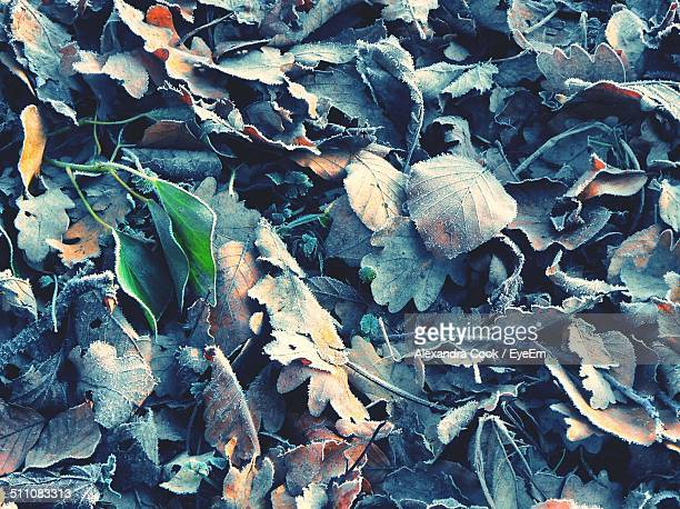 Close-up of frost on fallen leaves