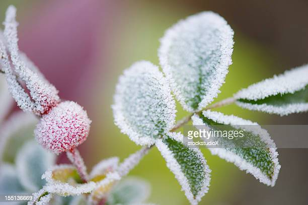 Close-up of frost on plant leaves in the Fall