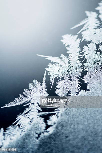 Close-up of frost