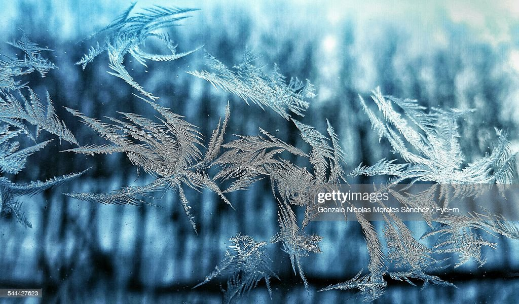 Close-Up Of Frozen Plants Outdoors : Stock Photo