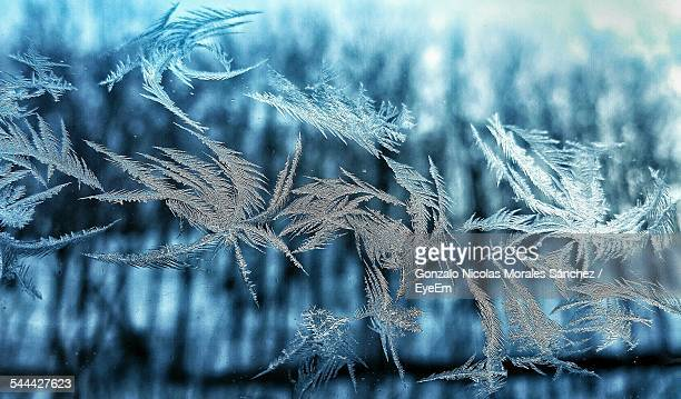 Close-Up Of Frozen Plants Outdoors