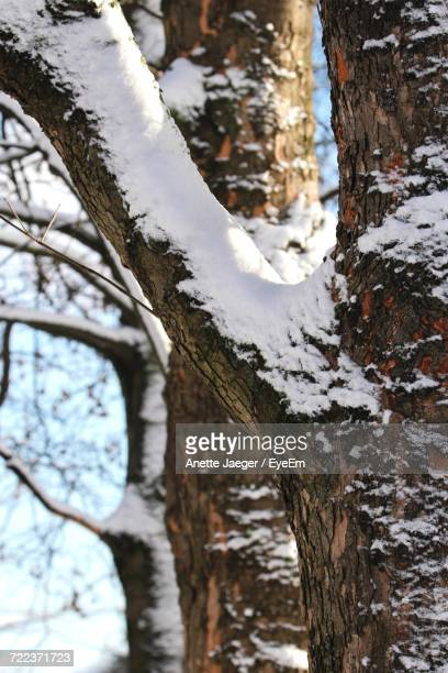 Close-Up Of Frozen Tree Against Sky During Winter