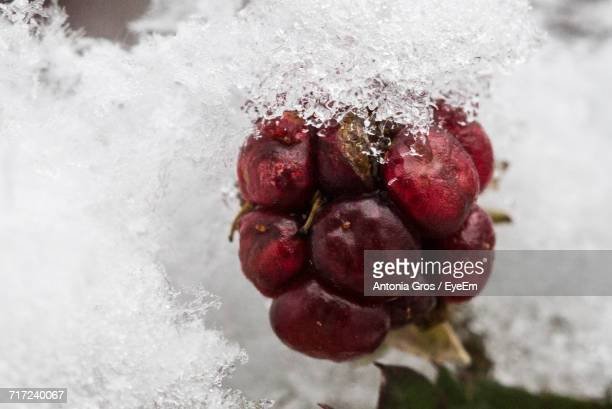 Close-Up Of Fruits With Snow