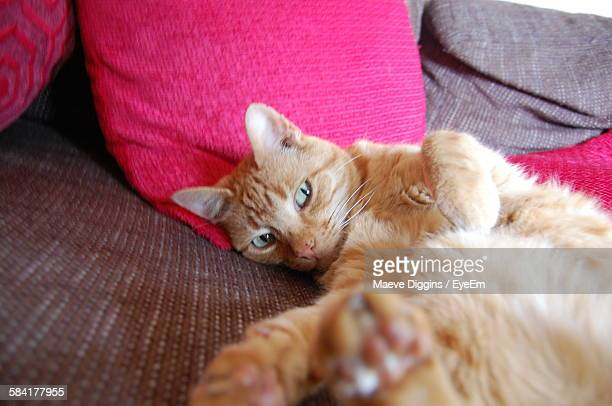 Close-Up Of Ginger Cat Lying Down On Sofa